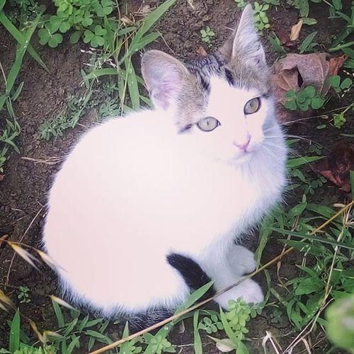 Gel sevicem dedim gelmedi 😼 Sanatı Seviyorum Sanatçısından ötürü 💜 cat kedi beyazkedi whitecat white cats catinstagram catlike seni yiieeerimmn 😹😽😎