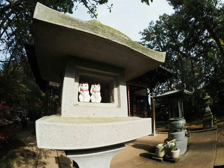 Olympus Om-d E-m10 Taking Photos Japan From My Point Of View Relaxing Fisheye Walking Around Japanese Temple Cat Gotokuji 招き猫 まねきねこ Light And Shadow
