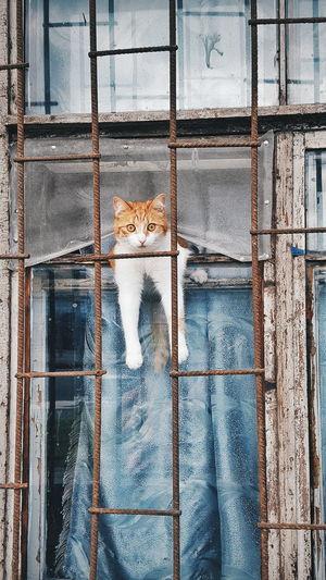 Portrait Of Cat On Window