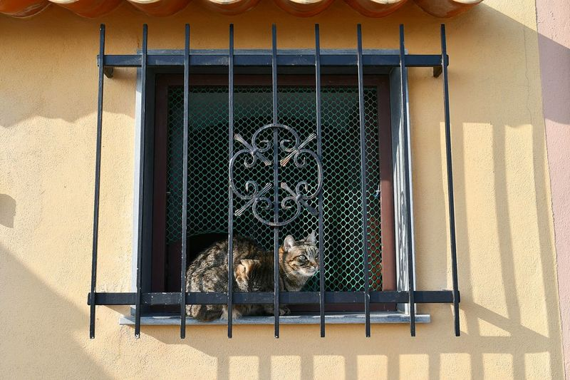 cat at the window in sunny winter day Cat At The Window In The Sun Domestic Cat Pet House Cat European Cat Relaxing Cat CAT IN THE SUN House Detail Travel Genova Italian Riviera Window Building Exterior Metal Grate Architecture No People Built Structure Day Security Bar Outdoors