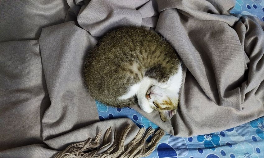 curled into a