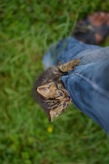New baby kitten climbing my jeans. Cats Of EyeEm EyeEm Best Shots Body Part Care Cat Day Domestic Domestic Animals Domestic Cat Feline Hand Human Body Part Human Hand Jeans Kitten Kittens Of Eyeem Lifestyles Mammal One Animal Outdoors People Pet Owner Pets Real People Vertebrate