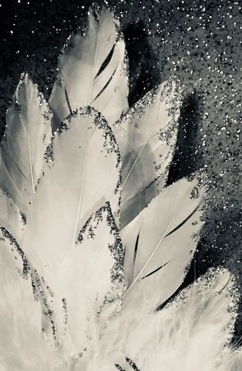 No People Leaf Fragility Close-up Nature Day Indoors  Beauty In Nature Freshness Photographer Photography Decoration Blackandwhite Paillette Feather