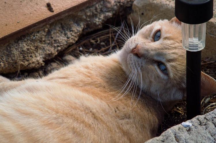 Animal Themes One Animal Domestic Animals Mammal Day Pets No People Outdoors Close-up EyeEm Nature Lover Mallorcaisland Mallorca (Spain) Mallorcaphotographer Cala Figuera Manuelkiese EyeEm