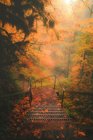 Autumn Forest Nature Orange Color Beauty In Nature Outdoors Tree No People Hiking Adventurous EyeEm Gallery EyeEm Masterclass Oregon EyeEm Best Shots Leaf EyeEm Best Edits Getty Images Majestic Day Fog Early Evening Tree Pretty Travel Destinations High Angle View