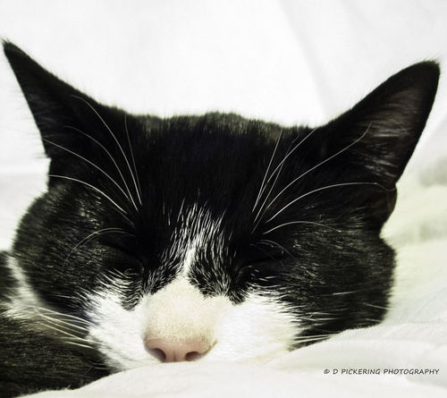 Sleeping Black And White Collection  Cat Lovers EyeEm Best Shots Photo Of The Day