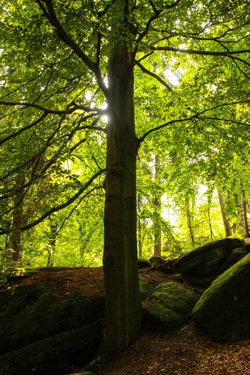 Tree Nature Tree Trunk Tranquility Growth Outdoors Tranquil Scene Forest Day Beauty In Nature Sunlight No People Scenics Branch Landscape Sky Moss Forest Photography Green Backlight Sun In The Forest The Week On EyeEm EyeEmNewHere