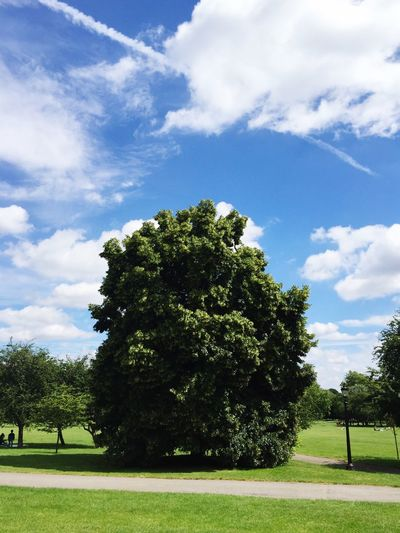 In An English Country Garden Primrose Hill London perfect Blue Sky