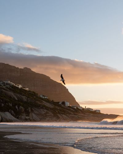 Soaring Bird Flying Summer Cape Town EyeEm Gallery Landscape EyeEm Nature Lover EyeEm Selects Eye4photography  EyeEm Best Shots South Africa Sky Sea Water Land Beach Scenics - Nature Beauty In Nature Nature Tranquil Scene Cloud - Sky Sunset Tranquility Mountain Travel Destinations Outdoors Holiday
