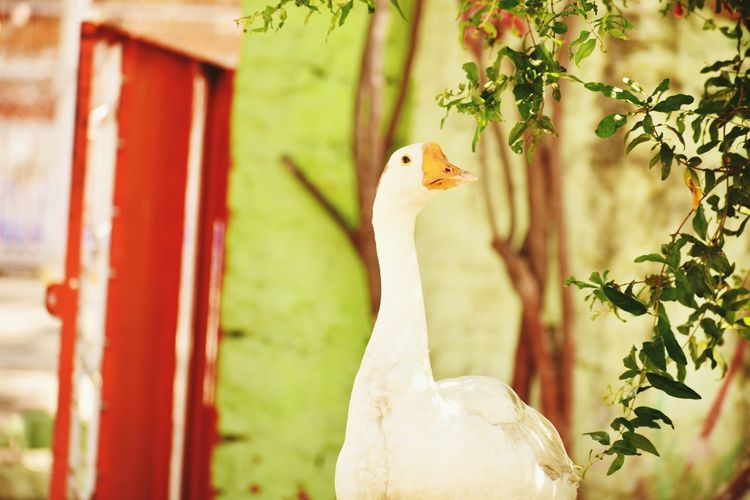 Duck Lyf the photo of today my best angle