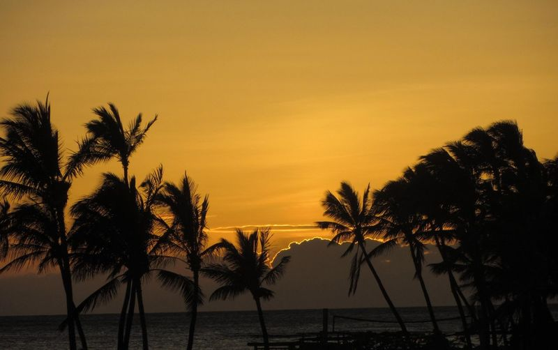 Big Island, Hawaii Big Island Hawaii Reflection Beach Beauty In Nature Day Horizon Over Water Nature No People Outdoors Scenics Sky Sun Sunset Tranquil Scene Tranquility Water Palm Tree Silhouette Colour Your Horizn