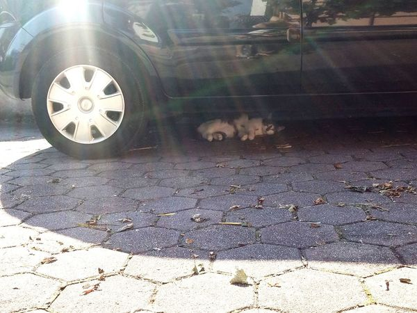 Invisible Cat Too Hot Outside  Summer Cat Under The Car Car Outside