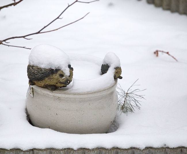 Artificial Hedgehogs On Pots Covered With Snow