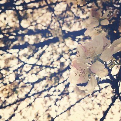 Springfeeling  Springinthecity Blossom Pastel hometownlove thisisleipzig