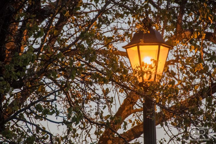 By the soft glow of the streetlight... Lamppost Streetphotography Streetlights Lighting Equipment Tree No People Nature Outdoors Illuminated Beauty In Nature