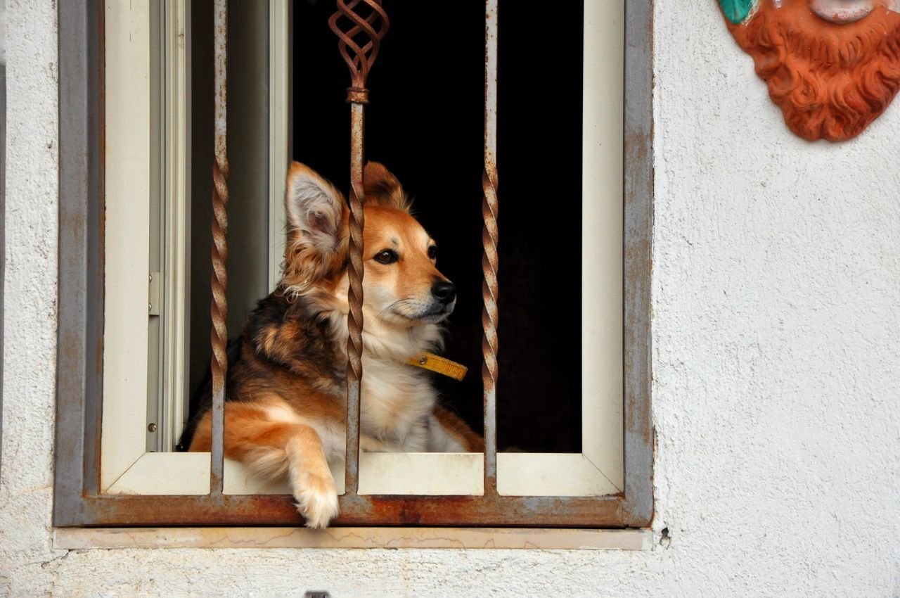 dog, pets, one animal, domestic animals, animal themes, window, mammal, day, no people, outdoors