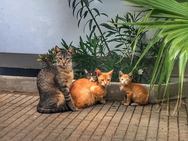 Domestic Cat Domestic Animals Pets Animal Themes Mammal Feline Plant No People Looking At Camera Sitting Portrait One Animal Day Outdoors Ginger Cat Nature