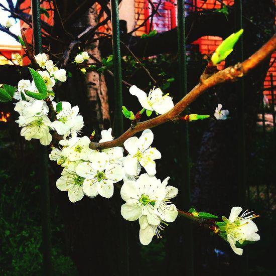 Secret Garden 🌷 Flowers 🌹 Plants And Flowers Flower Taking Photos Walking Around White Outside