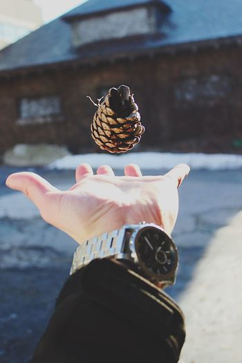 Cropped Image Of Hand Catching Pine Cone Against House During Winter