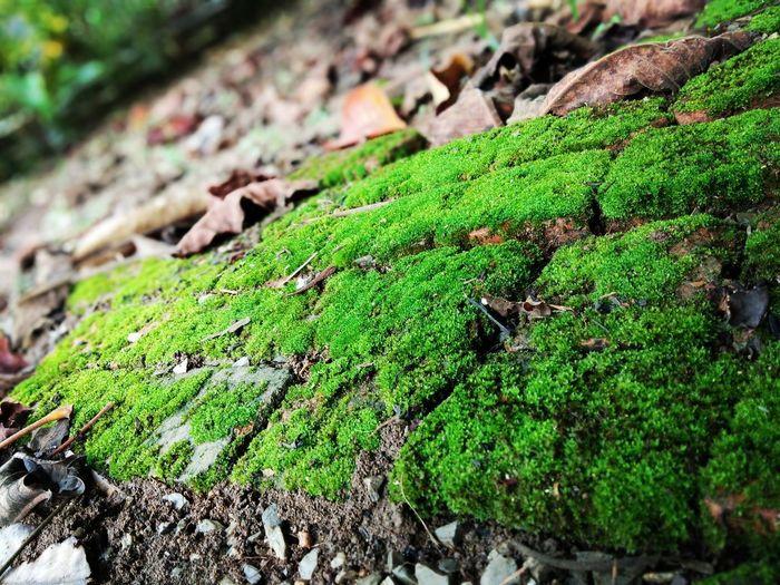 มอสเขียวๆ Reptile Tree Leaf Close-up Animal Themes Green Color