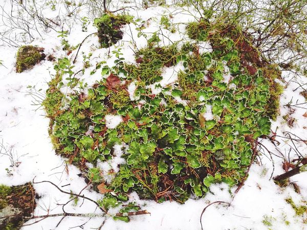 Winter Nature Green Color Plant Beauty In Nature Outdoors