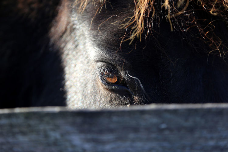 Close-up portrait of horse in animal pen