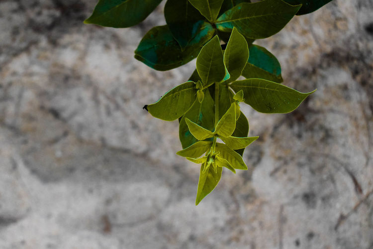 High angle view of leaves against wall