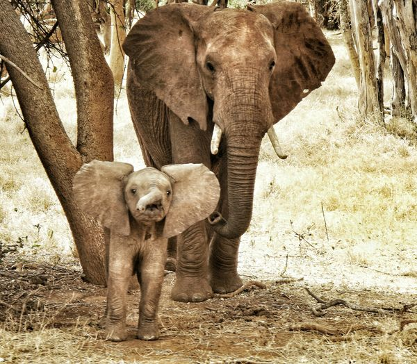 Elephant with calf walking on field
