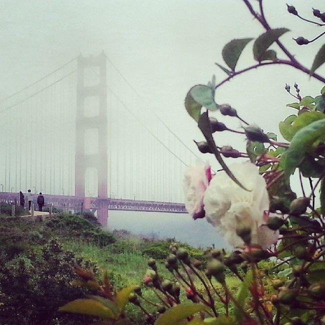 Meanwhile in San Francisco it's a little foggy Instagood GoldenGateBridge Sanfrancisco California Westcoast travel adventure fog