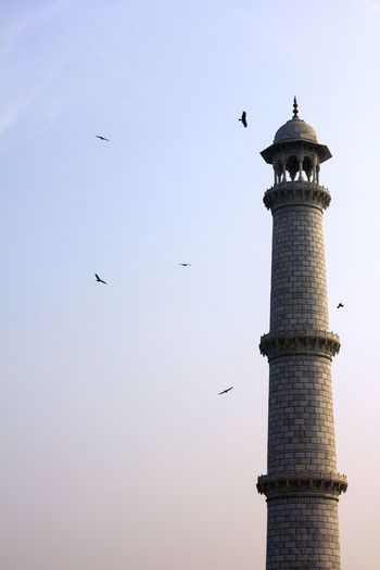 Taj Mahal Taj Mahal, Agra Animal Themes Architecture Bird Clear Sky Day Flying Low Angle View No People Outdoors Sky Travel Destinations