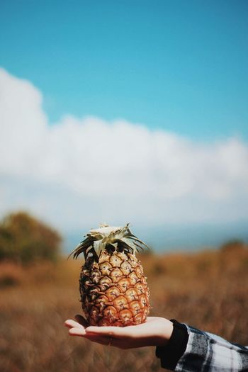 Close-up of person holding pineapple against sky