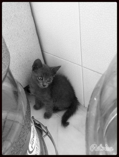 Cat Love Enjoying Life IPhone