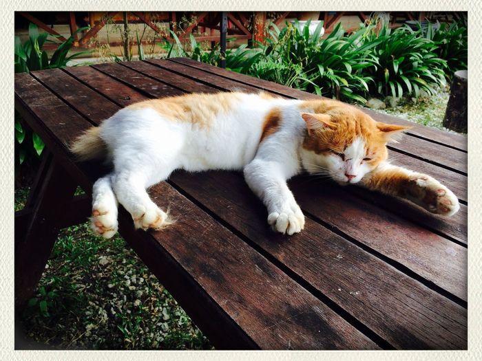 Cat♡ Janda Baik