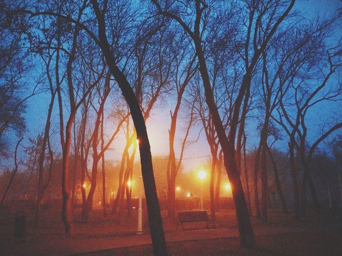 Vscocam Autumn