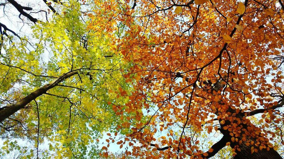 Kettősszég ősz First Eyeem Photo Autumn Autumn Colors Autumn Leaves