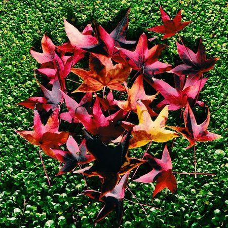 No Filter Natural Nature Red Green Yellow Fall Insiran1 Insiran @motelghoo