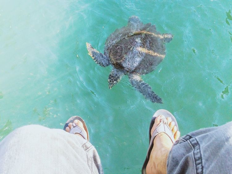 Hi! Hello World Sea Turtle Turtle Turtle 🐢 Love The Sea Foot Swim Swimming Sealife Enjoying Life