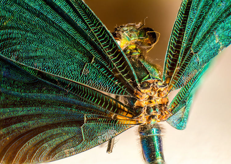Animal Themes Animal Wildlife Animals In The Wild Beauty In Nature Close-up Dragon-fly Fragility Green Color Insect Macro Macro Photography Makro Makro Photography Nature No People One Animal