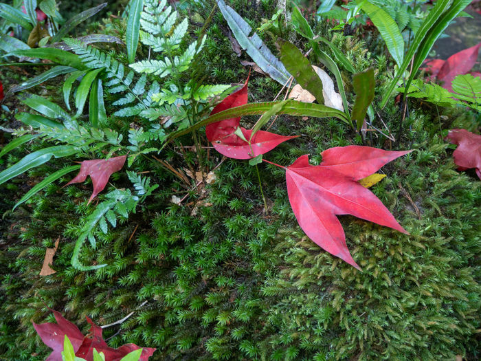 High angle view of red flowering plant leaves