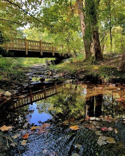 Bridge over lake in forest