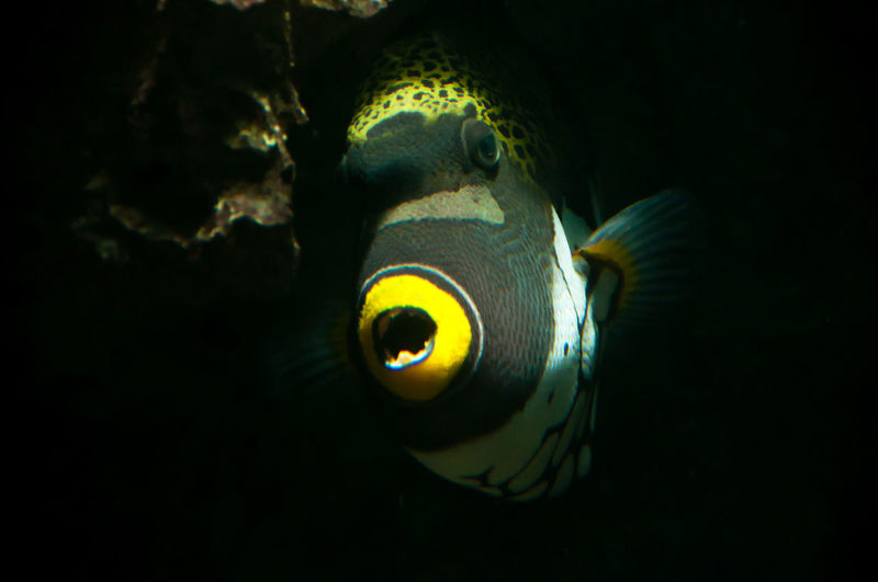 Aquarium Artis  Beauty In Nature Black Background Close-up Fish Illuminated Nature Netherlands No People Yellow