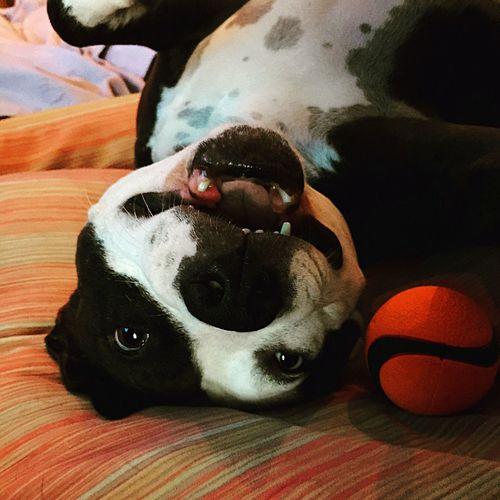 Close-up of dog lying on sofa