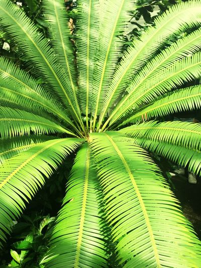 Palm Green Color Leaf Plant Part Plant Growth Fern Backgrounds