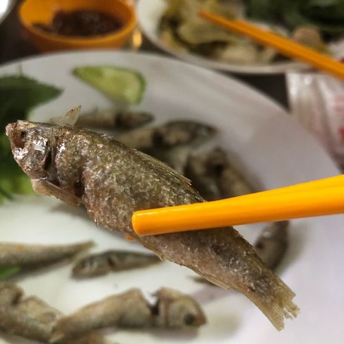 Fried fish Close-up Animal No People Food Indoors  Seafood Food And Drink Freshness High Angle View