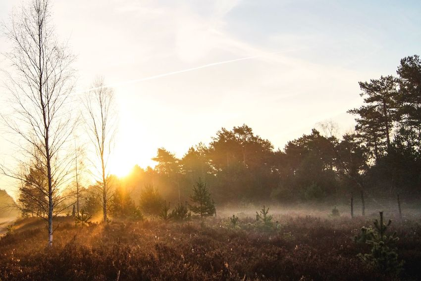 Foggy field while sunrise 🌅 Wanderlust Tree Nature Beauty In Nature Sunset Tranquil Scene Sunbeam Growth Tranquility No People Sun Field Scenics Sunlight Grass Landscape Outdoors Sky Silhouette Plant Day
