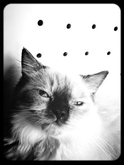 Cat Monochrome Blackandwhite Selfportrait