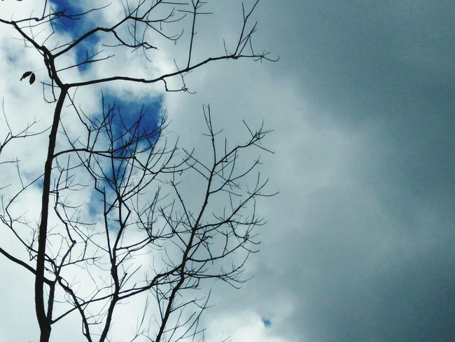 Nature Beautifulinnature Naturalbeauty Photography Landscape Trees And Sky Sky And Clouds