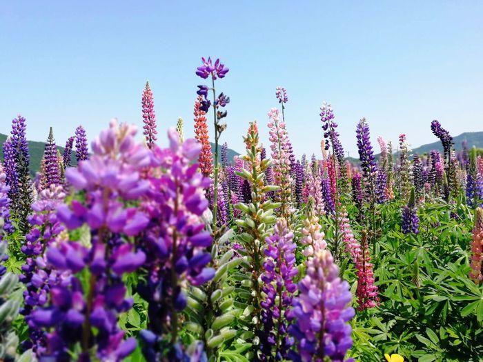 💠🏵🌿🌿 Flower Beauty In Nature Sky