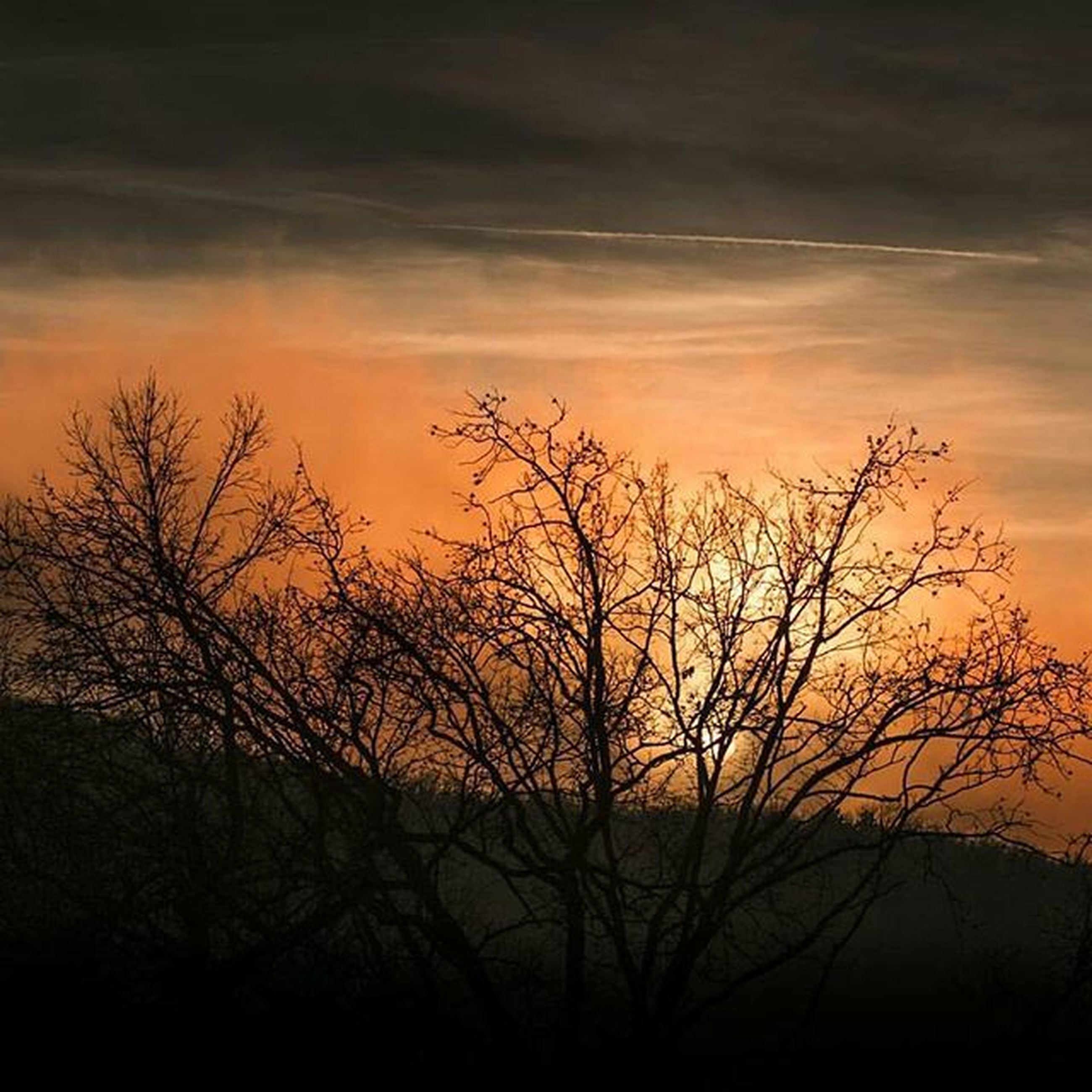 sunset, silhouette, bare tree, sky, tranquility, orange color, scenics, tranquil scene, beauty in nature, branch, tree, cloud - sky, nature, idyllic, dramatic sky, cloud, landscape, outdoors, majestic, cloudy