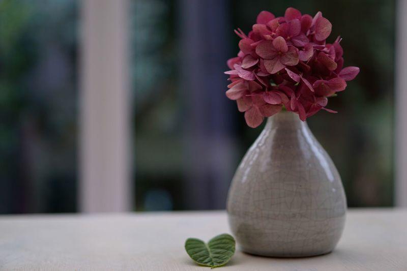 Close-up of pink rose in vase